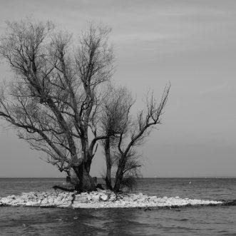 Das Wesen der Bäume